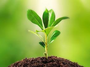 Seedlings and Saplings